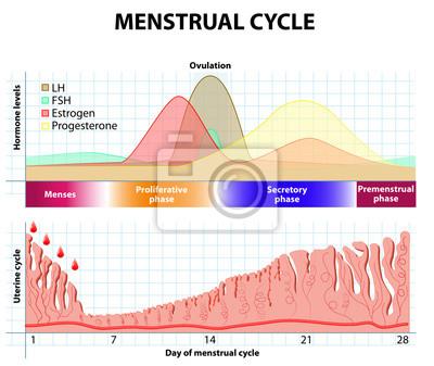 hormony podczas montażu