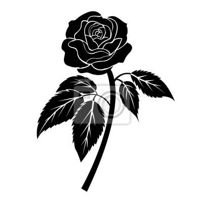 Fototapeta Czarna Róża Ilustracja Tatuaż Na Białym Tle Izolowany Wektor