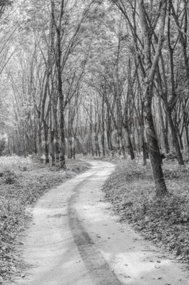 Fototapeta Czarno-biała droga do lasu