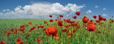 Fototapeta Czerwone maki i niebo z chmurami