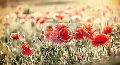 Fototapeta Czerwone maki na łące
