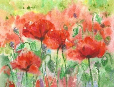 Fototapeta Czerwone maki tło kwiaty, akwarela.