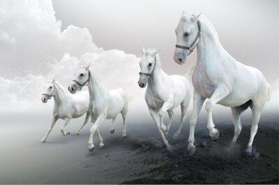 Cztery białe konie