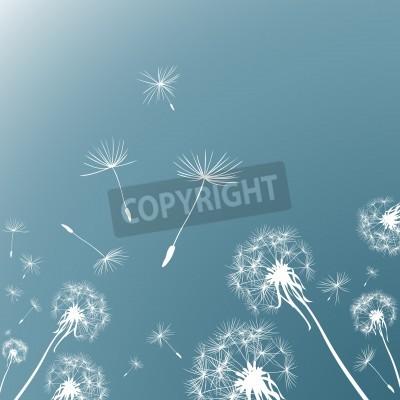 Fototapeta dandelions na wietrze