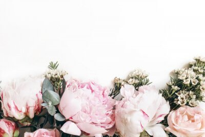 Fototapeta Decorative web banner made of beautiful pink peonies, rosies and eucalyptus isolated on white background. Feminine floral frame composition. Styled stock photo.Empty space. Flat lay, top view.