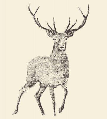 Fototapeta Deer grawerowania, vintage ilustracji wektorowych
