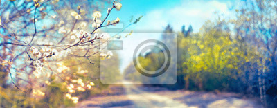 Fototapeta Defocused spring landscape. Beautiful nature with flowering willow branches and forest road against blue sky with clouds, soft focus. Ultra wide format.