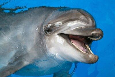 Fototapeta Dolphin patrząc w górę