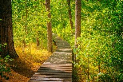 Fototapeta Drewniane ścieżki w lesie