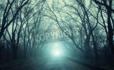 Fototapeta Droga przechodząca przez scary tajemniczy las z zielonym światłem we mgle jesienią. Magiczne drzewa. Natura mglisty krajobraz