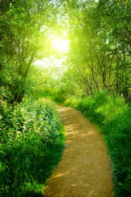 drogi w głębokim lesie