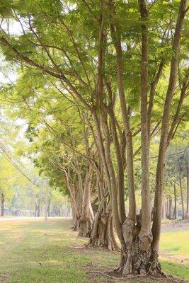Fototapeta Drogowego w ogrodzie