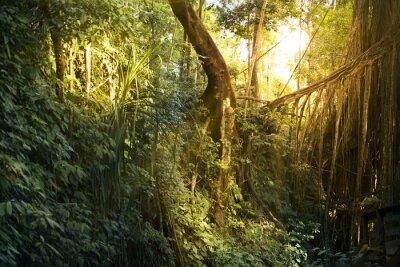 Fototapeta Drzew i liści lasu tekstury.