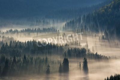 Fototapeta drzew na łąki w dół woli lasu iglastego w mglisty górach