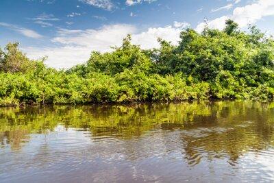 Fototapeta Drzewa podszewka rzeka Yacuma w Boliwii