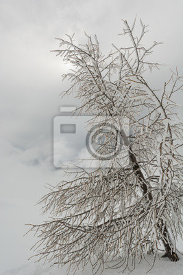 Fototapeta Drzewa pokryte szronem