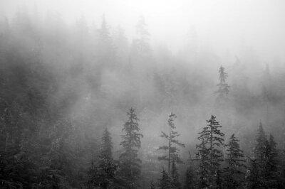 Fototapeta Drzewa w górach na mglisty poranek na Alasce