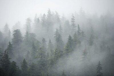 Fototapeta Drzewa w górach w mglisty poranek na Alasce