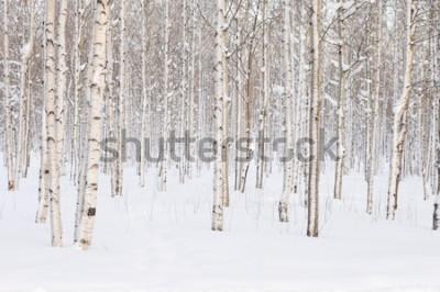 Fototapeta Drzewa w parku lub lasy w zimowym śniegu