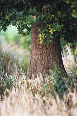 Fototapeta Drzewny bagażnik między wysoką żółtą trawą.