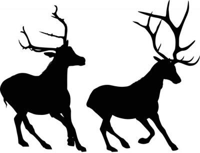 Fototapeta Dwa jelenie biegania czarne samodzielnie na białym tle