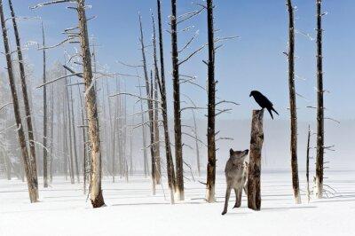Fototapeta Dwie sekundy do życia - Wolf i Raven