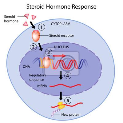 montaż hormonów kobiet kąta kąta zbierania