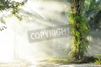 Fototapeta Dzień Dymu Dymnego Palmu Na świeżym powietrzu