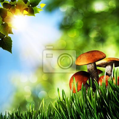 Fototapeta Dzień urody Lato w lesie. Naturalne tła z pięknem