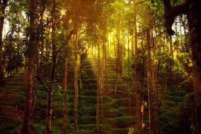 Fototapeta Dzika dżungla na wysokościach.