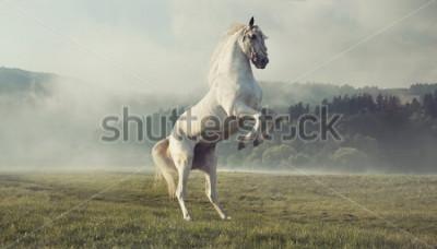Fototapeta Dziki biały koń