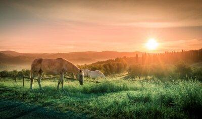 Fototapeta Dzikie konie i toskańskie sunrise