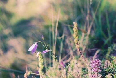 Fototapeta Dzikie kwiaty