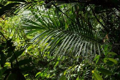 Fototapeta Dżungla