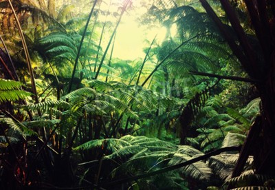 Fototapeta Dżungla na Hawajach