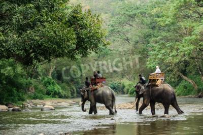 Fototapeta Elephant trekking przez dżunglę w północnej Tajlandii