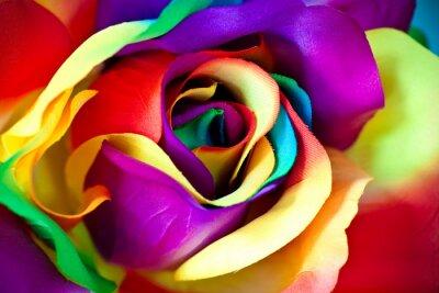 Fototapeta fałszywy kwiat róży