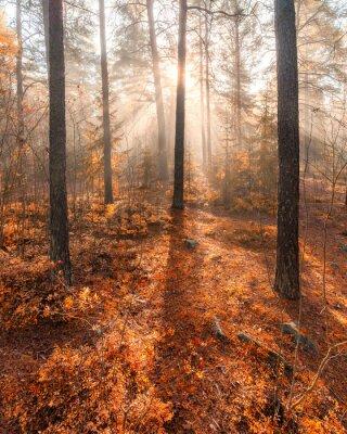Fototapeta Foggy rano światło słoneczne las