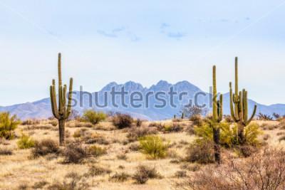 Fototapeta Four Peaks, wybitny punkt widokowy Gór Mazatzal na oferty linii horyzontu Phoenix w Arizonie, dostępne są wysokimi kaktusami saguaro na pustyni.