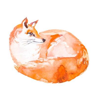 Fototapeta Fox na białym tle. Akwarela. ,