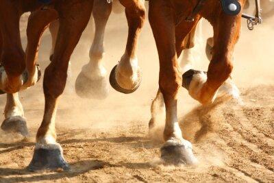 Fototapeta Galopującego konia Kopyta