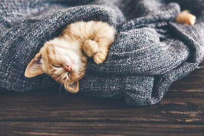 Fototapeta Gigner kotek śpi