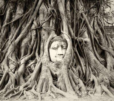 Fototapeta Głowa Buddy w korzeniach drzew na Wat Mahathat, Ayutthaya, Tajlandia
