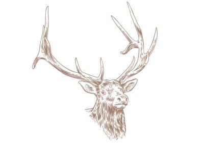 Fototapeta Głowa jelenia