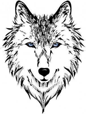 Fototapeta Głowa wilka
