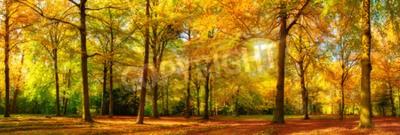 Fototapeta Gorgeous jesienią krajobraz panorama malowniczy las z mnóstwem ciepłych promieniach słońca