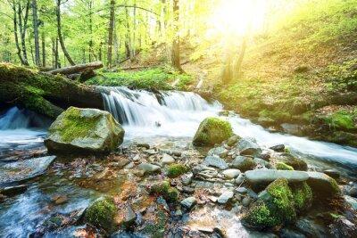 Fototapeta Górski potok wodospad w zielonym lesie