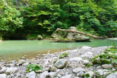 Fototapeta Górskie rzeki na Kaukazie koło Soczi