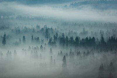 Fototapeta Góry Tatry i lasy we mgle, Zakopane, Polska