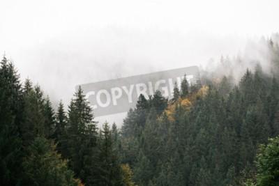 Fototapeta Góry z jodłami pokryte mgłą